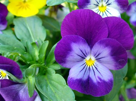 Wablittleflower